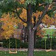 Swing tree