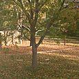 Swing tree in the fall