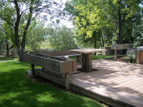 Back yard tree trunk table